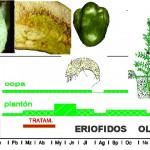 Eriofidos Tratamiento